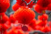 paper red lantern hang on tree branch