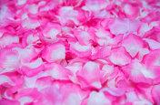 Artificial rose petals background