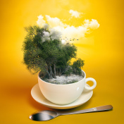 Forest in Teacup