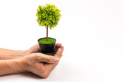 fake tree in hand on white background, earth day concept
