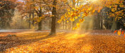 Beautiful colored trees in autumn, landscape photography