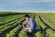 Farmer in soybean field with tablet