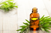 tea tree oil in the amber glass bottle and fresh tea tree leaves