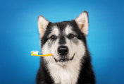 a dog with toothbrush in the mouth