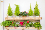 shelf with small potted plants and flowers