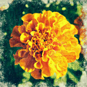 Abstract beautiful yellow flower blooming on oil painting background, Digital picture convert to art.