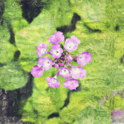 Abstract beautiful purple flower blooming on oil painting background, Digital picture convert to art.