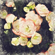 Abstract beautiful flower blooming on oil painting background, Digital picture convert to art.