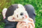Little playful dog