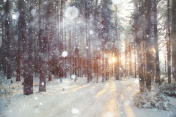 background winter forest sunny day