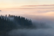 Forest in the mountains covered with fog
