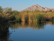 Pond at Clark County Wetlands Park