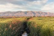 Alviso Wetlands and Diablo Mountain Range