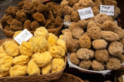 Natural sea sponge on street shop in old town of City of Rhodes Greece