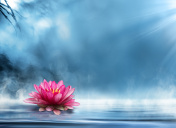 waterlily on water - spirituality zen in nature - relaxation