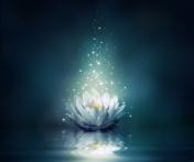 magic flower on water