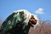 Japanese Traditional Lion Dance