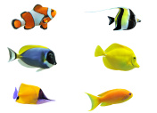 Image set of six tropical fish