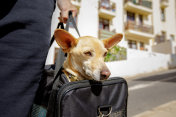 dog in transport box or bag ready to travel