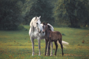 Mother's horse love