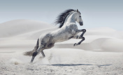Picture presenting the galloping white horse