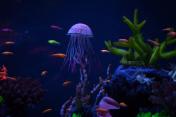 Beautiful jellyfish close up