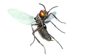 metal robot insect isolated on white with clipping path