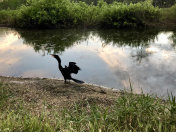 black bird spreading wings