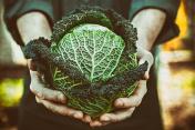 Farmer with kale