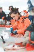 Alaska Fish Cleaning