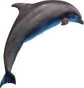 Dolphin Cutout