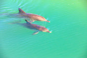 Two Dolphins Monkey Mia