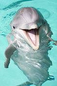 happy bottlenose dolphin