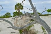 Cumberland Island, GA - Sand Dunes and Palm