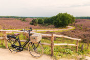 Electric bicycle with basket in Dutch national park The Veluwe