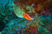 Colourful, Tropical Fish