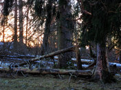 Natural Disaster - Forest storm damage after a Cyclone. German, Bavaria.