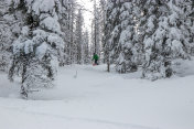 Man snowboarding in forest covered with deep snow