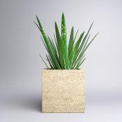 Small Potted Plant - Aloe Vera