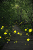 Fireflies in a fairy forest. Wooden bridge in a forest. Ropotamo, Bulgaria