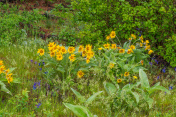 Wildflowers along a beautiful Pine Ridge Trail
