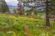 Wildflowers along a beautiful Pine Ridge Trail