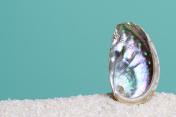 Iridescent abalone shell on white sand on turquoise background