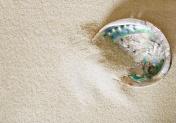 Big abalone shell on white sand