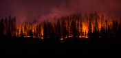 Forest Fire Panorama