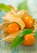 Close-up of Physalis fruits