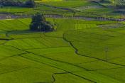 Farmland in Yangshuo,Guilin,China