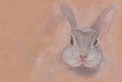 Cute rabbit or hare drawn by pencils on a craft brown paper. Great as Mid Autumn Festival greeting card template.