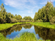 lush green vegetation