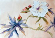 White hibiscus flower, ink painting